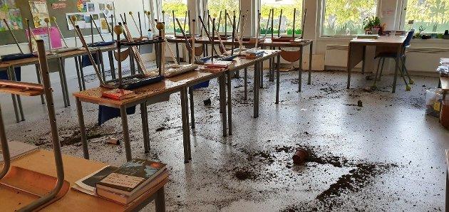ØDELAGT: 6. trinns planteprosjekt fra Grønn uke, er ødelagt og ligger utover gulvet i klasserommet.