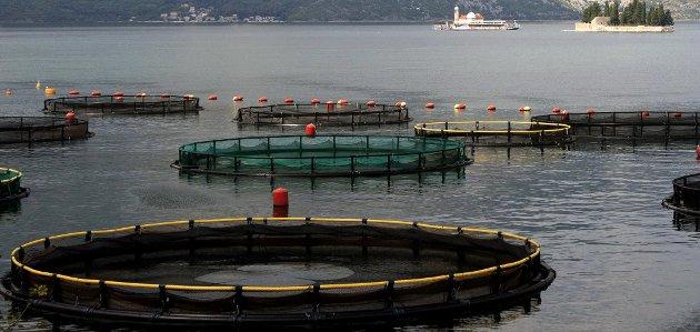 OPPDRETT: Eventuelt rømt laks i Oslofjorden vil være en katastrofe, mener innsenderne. ILLUSTRASJONSFOTO: Colourbox