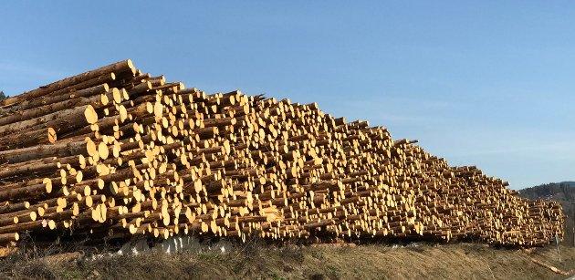 GRØNN FRAMTID: Skogbruket med tilhørende næringskjede er viktig, skriver Lars Elsrud