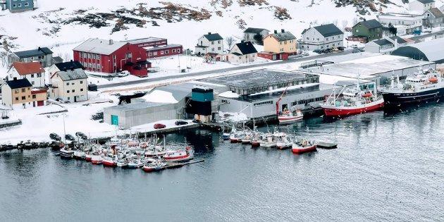 Fiskebåter i flytebrygger og ved fiskebruket Nordvågen AS.  Foto: Bernt-Aksel Jensen
