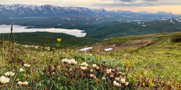 Norge sluttet seg til FNs konvensjon om biologisk mangfold i 2011. Dette betyr at all norsk natur skulle vært robust og ved god helse innen 2020, men rapporten viser at flere av økosystemene har hatt negativ utvikling de siste årene, skriver Rune Birger Nilsen.
