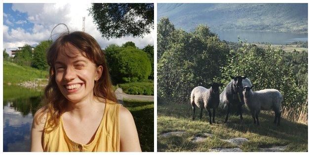 Beitedyr, til dømes sauen, kan ein påverknad på karbonlagringa i utmarka, skriv Astrid Bragstad Gjelsvik.