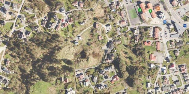Skog- og våtmarksområdet fra midt i bildet og til venstre er planlagt som ny skoletomt på Vea. Dagens sentrale skoletomt ligger oppe til høyre.