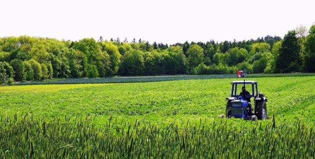 Spiskammers:  – Vi er næringsmiddelregionen som er og kommer til å fortsette og være helt sentrale i utformingen av morgendagens Norge, skriver Tage Pettersen.