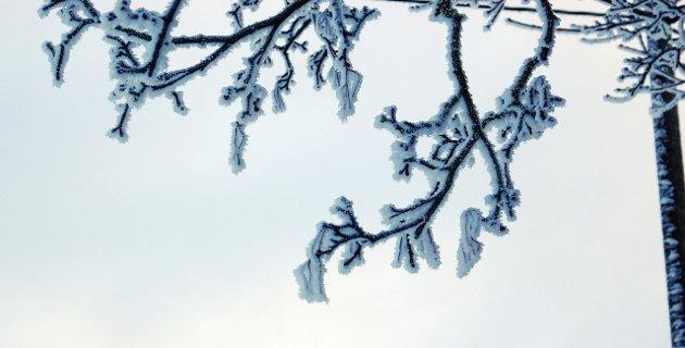 KULDE: Noen greiner henger som temperaturmålere.