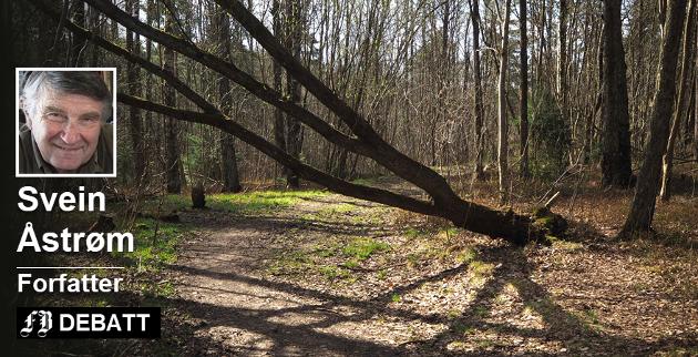 – Trærne spiller sitt skyggespill på stien. Nye scener utspiller seg etter hvert som sola flytter seg rundt. Hvilket figurteater ser vi i fullmånens lys, spør Svein  Åstrøm i en lyrisk lovprising av det utbyggingstruede skogsområdet på Lisleby. Foto: Svein Åstrøm