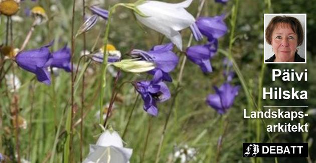 Vakker fagerklokke i veikanten. De hvite blomstene er en sjeldenhet. Päivi Hilska venter å se flere slike bilder i år, etter at det er bestemt å utsette kantslått langs fylkesveiene til ettersommeren.  Alle foto: Päivi Hilska