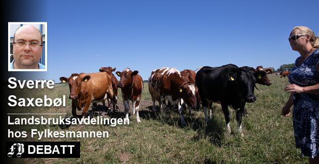 Sverre Saxebøl skriver at landbruket forlengst har tatt grep for å tilpasse drifta til den tørre sommeren, men tror det blir kroken på døra for mange gårdbrukere. Anne Tofteberg i Råde ser til at dyrene beiter – enn så lenge. Foto: Ida Christin Foss
