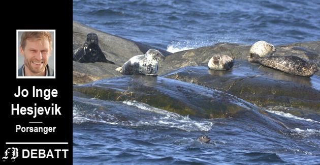 Sel som truer torsk og annen hvitfisk i Oslofjorden?  De to vil venstre er havert (eller gråsel) og mer utbredt steinkobbe til høyre.