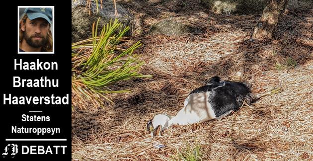 Det er nå samlet inn nok død ærfugl til at Norsk institutt for naturforskning kan finne ut om det er en bestemt årsak til den store fugledøden.