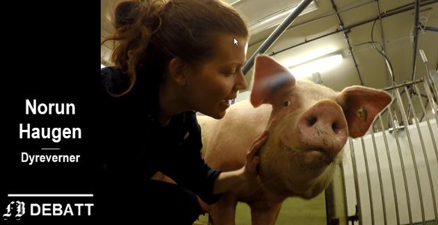 – Den dårlige oppfølgingen er et svik mot grisene, mener Norun Haugen.