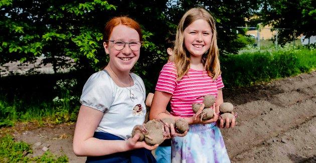 Klassevenninnene Viktoria (t.v.) og Anne har sikret seg favnen full av settepoteter med sorten Oleva. Til høsten håper de å ta opp avlingen og lage potetmos.