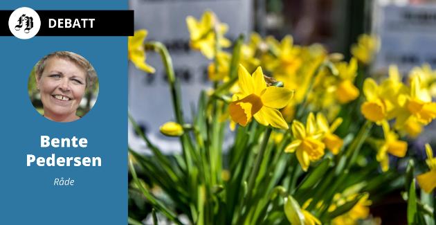 Påskeliljer (narcissus pseudonarcissus). – Grossisten sto frem og sa de var fortvilte over at de måtte kassere store partier med nettopp påskeblomster.