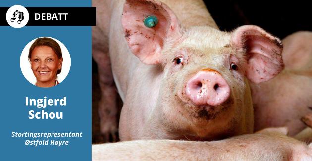 – Dette kan ikke bortforklares med enkelthendelser selv om vi også vet at de aller fleste svinebønder er seriøse, skriver Høyres landbruksnettverk.
