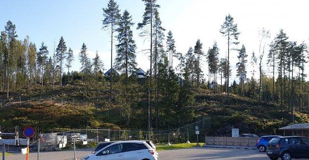VEKKERREAKSJONER:Hogstfeltet på Holum skog.