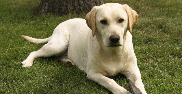 HYGGELIG HUND: Men ikke alle hundeeiere er så hyggelige når hunden deres har gjort fra seg, mener innsenderen.