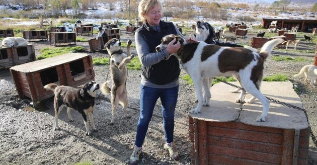 SA NEI: Også Tove Sørensen, eier og gründer av opplevelsesbedriften Tromsø Villmarksenter, fikk besøk av oppkjøperne. Hun sa blankt nei til salg, og synes utviklingen i reiselivsnæringa nå er skremmende. Foto: Nordlys