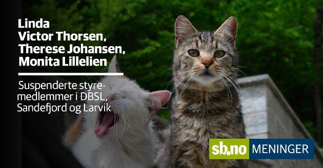 En av jobbene til Dyrebeskyttelsen er å ta seg av hjemløse katter. Men nå handler ordskiftet om noe helt annet.