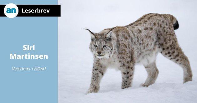 - Jakt på truede dyr er ikke noe å lage gladsaker av - tvert imot er dette et signal om at Norge ikke tar arbeider for naturmangfold på alvor, skriver Martinsen.
