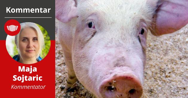 Lokal mat: Kilden til stolthet, kultur, attraktivitet, arbeidsplasser og bærekraft kan få et omdømmeknekk på grunn av griseskandalen.