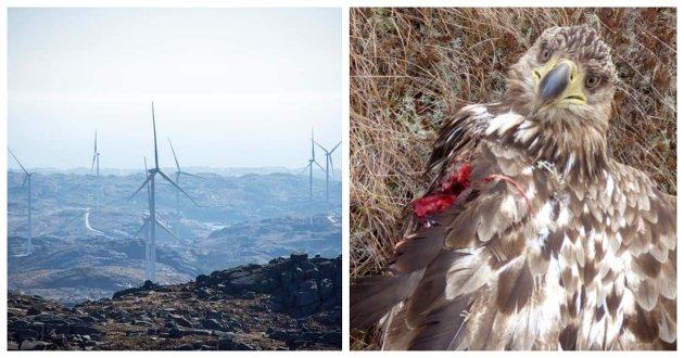 IKKE ROSENRØDT: Drømmen om at vindindustrien skal redde verden er nok mer rosenrød enn realiteten. Fotoet viser et av flere vindkraftverk i Bjerkreim kommune, skriver artikkelforfatterne.