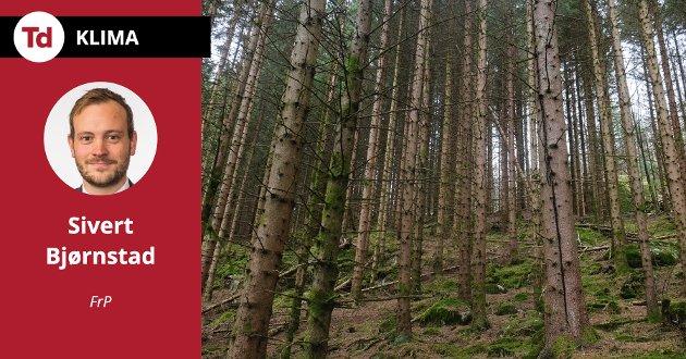 Norge må gjennomføre tiltak som kutter utslipp globalt. En enkel ting vi kan gjøre er å plante mer skog, skriver Sivert Bjørnstad (Frp).