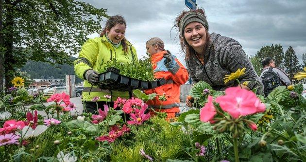 Blomsterpikene Elina Kulset, Lena Prestjord-Moen og Maiken Lauvås Nystad har startet med å plante i bedene i byen. Snart blir det sommer.