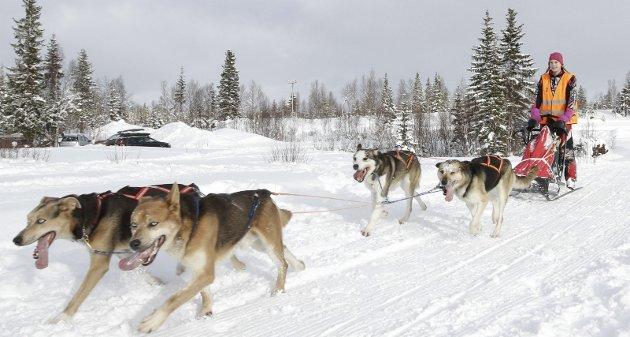 Hundeløpet Herringen Trail 2017 på Sjåmoen. Maja Ånes (14) debuterte i hundeløp, men har kjørt hund siden hun lå i pulken sammen med sin mor Mette. Bilder: Per Vikan