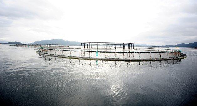 Skal vi ofre en bærekraftig norsk matproduksjon, som tar internasjonalt ansvar på alvor, til fordel for en sjømatnæring som er langt unna FNs bærekraftsmål, spør Stein Brubæk.