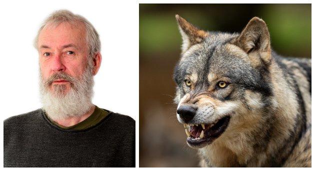 FANTERI: Det å jukse synes å være et universelt fenomen. Hvorfor, spør forsker Erik Tunstad, og forklarer med et ulve-eksempel.