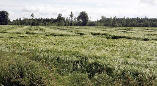 Forbrukes: Hvis matjorda skal reddes, må staten ta mer styring over arealpolitikken.Foto: Morgan Andersen