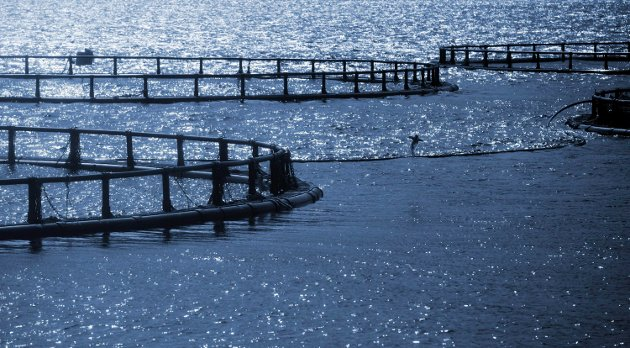 Round cages of Norwegian fish farm for salmon growingALNK: Stabile og forutsigbare inntekter? * 1820200605030658031PLNK: NLY12AVI20060508000 * 1820200605030650002IPTC: Country/Primary Location Name = Norway   Object Name = Round cages of Norwegian fish farm for salmon growing  Copyright Notice = Copyright: Eugene Sergeev  Keywords = cage ° fish ° aquaculture ° farm ° farming ° sea ° marine ° industry ° fishing ° net ° fishery ° seafood ° water ° europe ° food ° commercial ° catch ° nature ° business ° plant ° environment ° circle ° wave ° structure ° growth ° pool ° produce ° floating ° agriculture ° Norway ° norwegian ° salmon ° round ° grid ° mesh ° seawater ° fjord ° nobody ° buoy ° industrial ° agroculture ° rural ° blue ° monochrome ° toned ° dark  By-line = Photographer: Eugene Sergeev  Date Created = 2013-05-13LNNR: 1820200605030658032Nordlys 20200605 horizontal DPI_180x180 Lakseoppdrett NLY_Leserbrev Edda Media × 20200605 × NLY_Leserbrev × 8 × Version2 ×  ×  × 2015-1sr3_4080 × Nordlys_arkiv_678797291