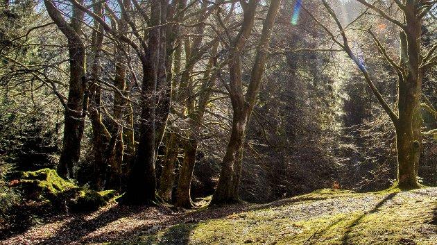Kan Tennebekk bli en fredelig skogsgravplass?