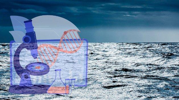 UiT – Norges arktiske universitet er overbevist om at det finnes verdifulle byggesteiner i marine organismer som kan anvendes både til nye medisiner og næringsmidler.