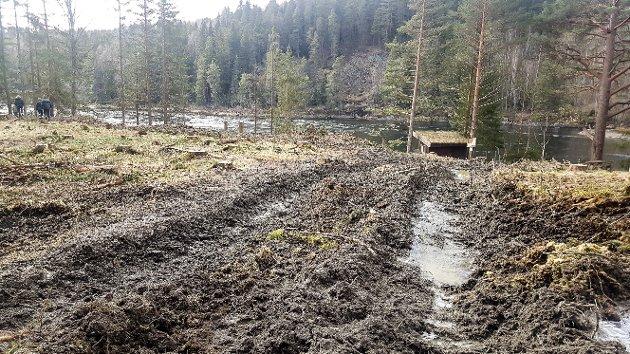 """SKJEMMENDE: Naturvernforbundet i Modum og Sigdal reagerer kraftig på hogsten som har skjedd i området ved Linnerudøra i Åmot, langs den populære turstien """"Modum på langs""""."""