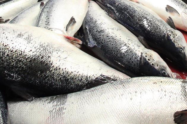 GODT NOK ARBEID? Når Havforskingsinstituttet no vil fjerne 60 norske oppdrettsanlegg, må ein spørje seg om miljøundersøkingane var gode nok i utgangspunktet, då konsesjonar og lokalitetar blei tildelt, skriv Steinar Hammersvik.