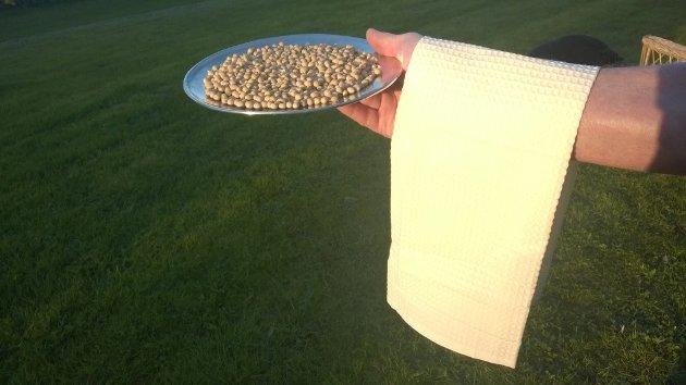 Soyabønner slik de ser ut når de kommer til Øra. Ved Denofa blir bønnene videreforedlet til olje, soyamel og lecithin. Det er soyamelet som brukes i fôrblandingen til kuene.