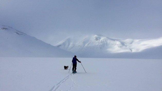BESSEGGEN: Topptur med randonee-ski og finsk lapphund.