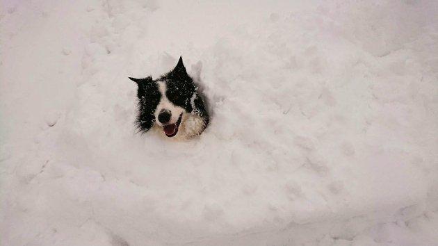 BORTE: En firbeint venn som er borte i snøen.