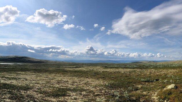 Innlandet SV vil ta vare på det biologiske mangfoldet, og stoppe ødeleggelse, oppdeling og forringelse av natur i fylket.