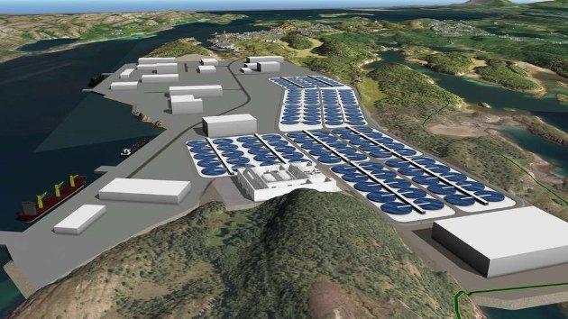 OPPDRETT: Aquaculture Innovasjon har planer om et landbasert oppdrettsanlegg på Toft.