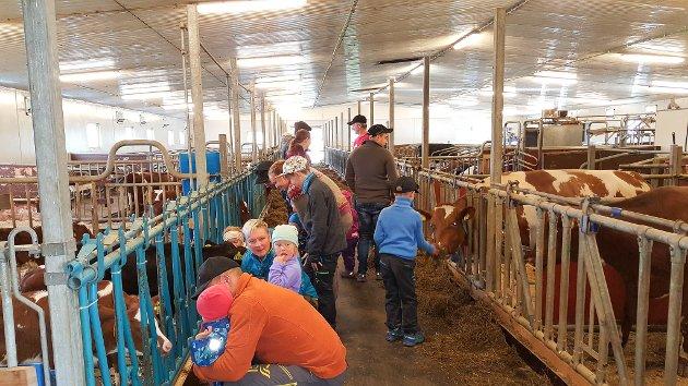 Åpen gård i regi av Alta Bondelag ble arrangert på Heimdal gård på søndag. Over 1.300 barn og voksne besøkte gården i Øvre Alta. De fikk se dyrene på gården, samtidig som det var lagt opp til flere andre aktiviteter.