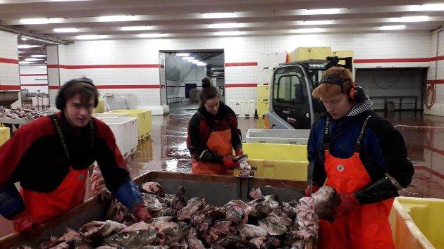Oppdatert: 15.APRIL:  LIVET PÅ KAIA: Også i år vil Lofotposten følge livet på kaia rundt om i Lofoten.  Dette er album nummer to i år. VÆRØY: Oscar,  Vilde OG Sander i tungeskjæringa