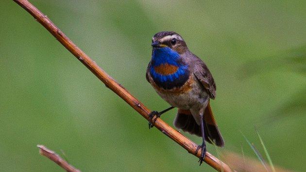 Norsk Ornitologisk Forening markerer Fuglenes dag over hele landet, siste helg i mai hvert år. Med dette vil de rette fokus mot fugl og naturvern.