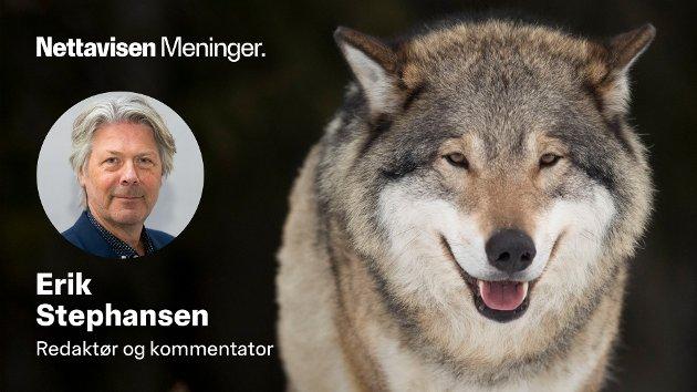 Vet du hvor mange mennesker ulven har drept i Norge de siste 200 årene? Eller skadd? Les saken, så blir du kanskje overrasket.