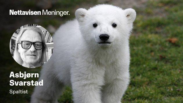 GLANSTID: Isbjørnen Knut var Berlin Zoos største stolthet i 2005. I 2011 døde han etter et liv påvirket av incest, stress og arvelige sykdommer.