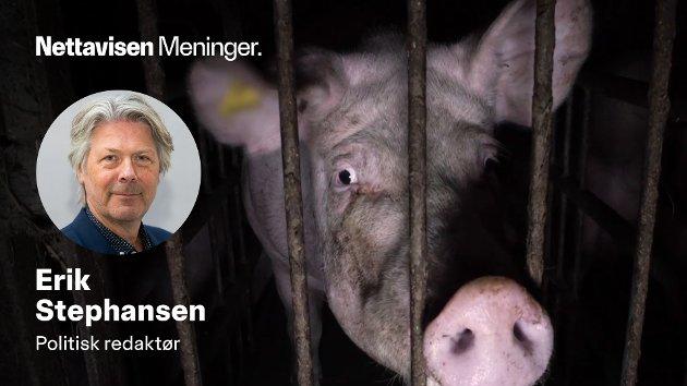 Det er ingen menneskerett å få lov til å mishandle dyr. Det må både kjøttprodusentene og Mattilsynet ta konsekvensen av.