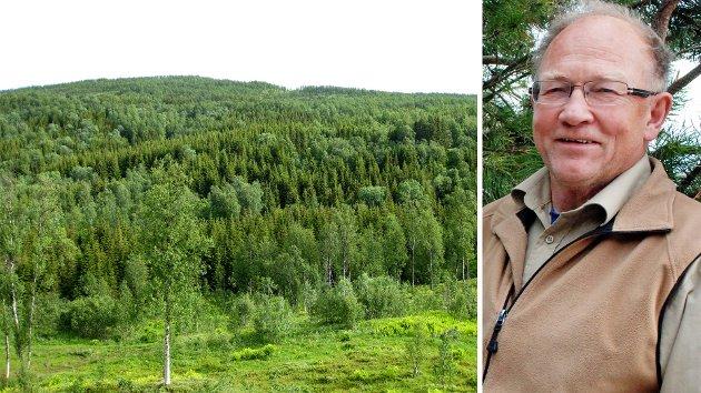 For alle med litt kunnskap om skog og fototosyntese er det overraskende at man velger bort naturen sitt meget effektive og gratis tiltak gjennom fotosyntesen og karbonbinding i skog, skriver Gunnar Kvaal.