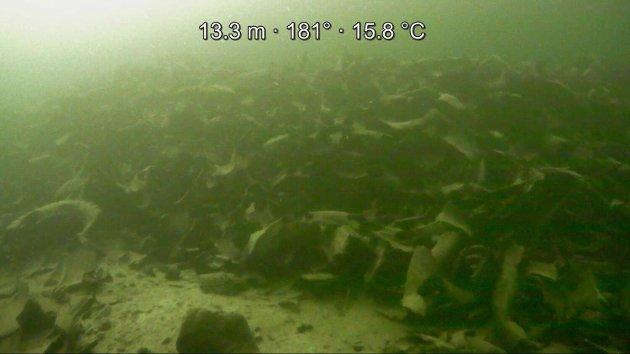 Et avfallsanlegg for kasserte bildekk ble nylig politianmeldt av Naturvernforbundet og Statsforvalteren i Vestfold og Telemark for ulovlige utslipp av oppklipte bildekk til sjø. En undervannsdrone dokumenterte store mengder dekkavfall (bildet) på havbunnen ved avfallsanlegget.