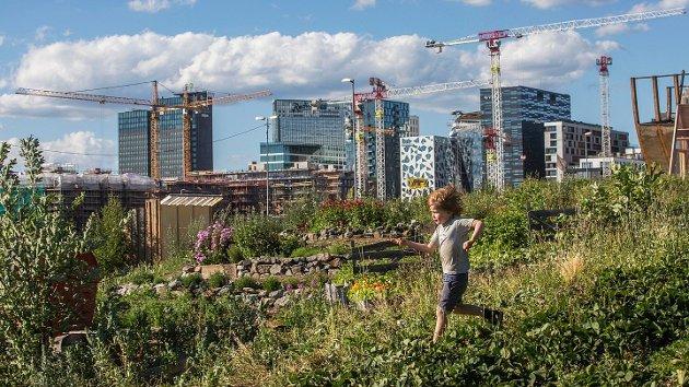 Gutt løper ned en blomstereng med store kraner og Oslo Barcode i bakgrunnen